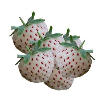 weiße Erdbeeren Flavour | Aroma von Vape Rebelz®