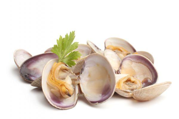 Muscheln Flavour | Aroma von Vape Rebelz®